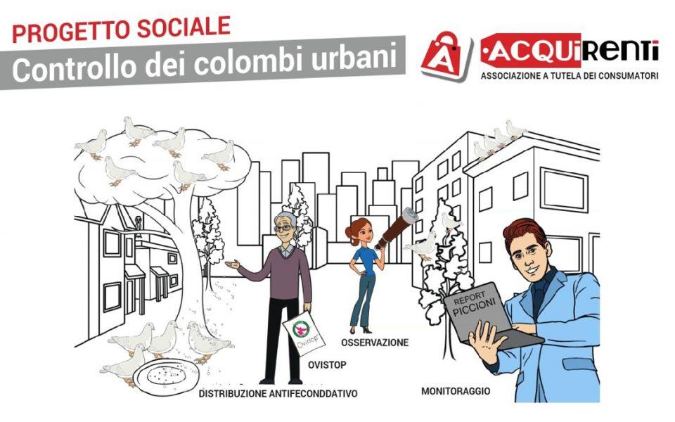 Progetto sociale di controllo dei colombi urbani qui vengono riassunti in immagine le fasi salienti
